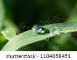 plants background with... | Shutterstock . vector #1104058451