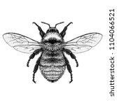 golden northern bumble bee  | Shutterstock .eps vector #1104066521