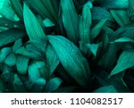 tropical leaf texture  large... | Shutterstock . vector #1104082517