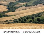 panoramic view of olive groves... | Shutterstock . vector #1104200105