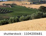 panoramic view of olive groves  ... | Shutterstock . vector #1104200681