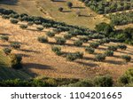 view of olive groves and... | Shutterstock . vector #1104201665