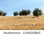 view of olive groves and... | Shutterstock . vector #1104202865