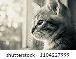 the kitten is hidden  the red... | Shutterstock . vector #1104227999