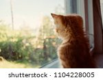 the kitten is hidden  the red... | Shutterstock . vector #1104228005