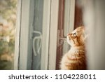 the kitten is hidden  the red... | Shutterstock . vector #1104228011
