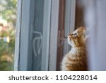 Stock photo the kitten is hidden the red kitten is frightened the blue eyed kitten the kitten s eyes the 1104228014