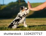 Stock photo beautiful puppy gives paw to owner 1104257717