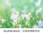 field wild flowers close up in... | Shutterstock . vector #1104286514