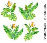 set of tropical watercolor... | Shutterstock . vector #1104323807