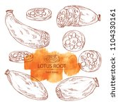collection of lotus root  root...   Shutterstock .eps vector #1104330161