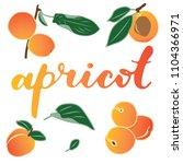 vector illustration of apricot... | Shutterstock .eps vector #1104366971