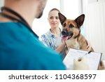 shepherd sog and its owner... | Shutterstock . vector #1104368597