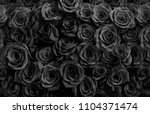Stock photo black roses isolated on a black background 1104371474
