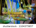 diy hydroponic cropping system... | Shutterstock . vector #1104375857