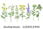 set with wild plant  sage ... | Shutterstock . vector #1104411944