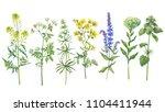 set with wild plant  sage ... | Shutterstock . vector #1104411944