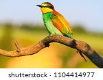 lonely exotic bird sitting on a ... | Shutterstock . vector #1104414977