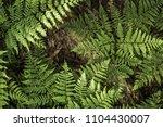 photo of fern leaves. interior... | Shutterstock . vector #1104430007