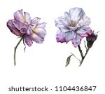 two flowers of a tea rose.... | Shutterstock . vector #1104436847