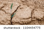 wheat ear in dry cracked soil.... | Shutterstock . vector #1104454775