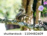 wonders of the brazilian fauna   Shutterstock . vector #1104482609