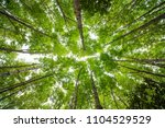 green tree and rain forest down ...   Shutterstock . vector #1104529529