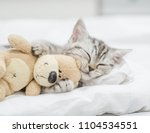 Stock photo close up baby kitten sleeping with toy bear 1104534551