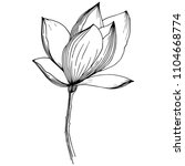 magnolia in a vector style... | Shutterstock .eps vector #1104668774