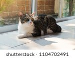 the lovely cat lie down next to ... | Shutterstock . vector #1104702491