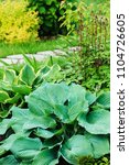 Small photo of different hostas planted with astilbe in garden mixed border. Shade tolerant plants in summer