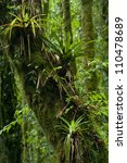 Epiphytes In Cloudforest ...