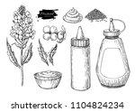 mustardi sauce set. drawing.... | Shutterstock . vector #1104824234