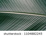 green leaves texture tropical... | Shutterstock . vector #1104882245