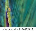 small water drop on a... | Shutterstock . vector #1104899417