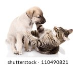 Stock photo dog and kitten isolated on white background 110490821
