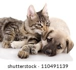 Stock photo kitten and a pup together isolated on white background 110491139