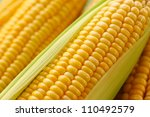 Grains Of Ripe Corn