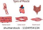 vector illustration of a types ... | Shutterstock .eps vector #1104954134