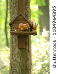 two red squirrels sit near a... | Shutterstock . vector #1104964895