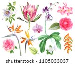 watercolor tropical plants and... | Shutterstock . vector #1105033037