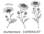 sketch floral botany collection.... | Shutterstock .eps vector #1105042157