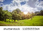 green park big tree and blue... | Shutterstock . vector #1105055564