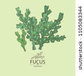 fucus  fucus seaweed  sea... | Shutterstock .eps vector #1105083344