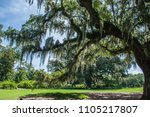 a day trip to airlie garden in... | Shutterstock . vector #1105217807