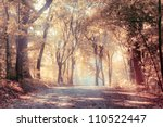 autumn trees in sunbeams  an... | Shutterstock . vector #110522447