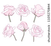 rose flowers linear graphic... | Shutterstock . vector #1105270844