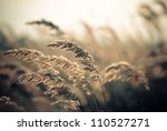 sunset grass on a wind | Shutterstock . vector #110527271