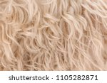 white dog curly hair  texture | Shutterstock . vector #1105282871