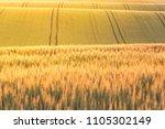 golden sunrise over wheat...   Shutterstock . vector #1105302149